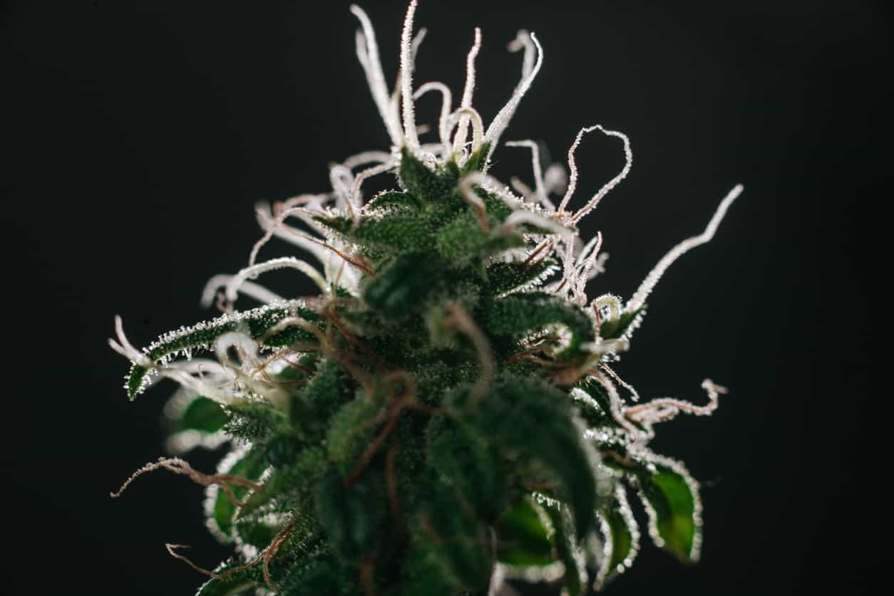 Where Can I Get A Medical Marijuana Evaluation?